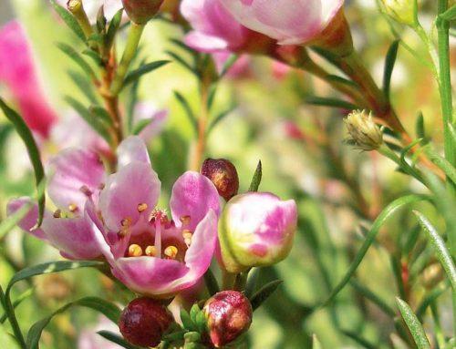 La Floriterapia con i fiori di Bach