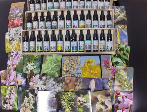 Trattamento con i fiori di bach